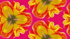 Tulpen-Komposition