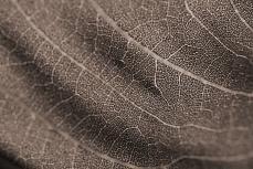 tessitura di foglia