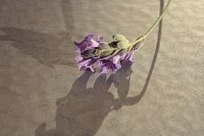 un giorno, un tavolo, un fiore