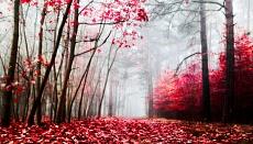 Rotes Laub