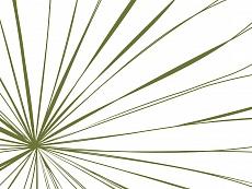 Strahlen, Farbvariante: brightgrün