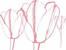 Tulpen II, Farbvariante: rosa