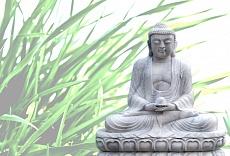 Buddha grass