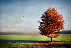 Dressed in autumn