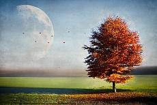 Enjoying the autumn light