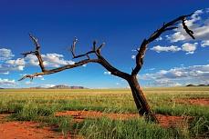Kahler Baum in der Wüste