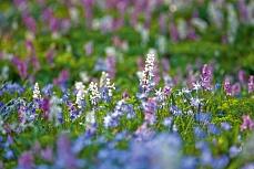 Eine Blumenwiese bitte