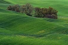 Toskana Verde