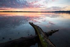 Baumstamm im Starnberger See