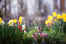 Frühlingsbeet