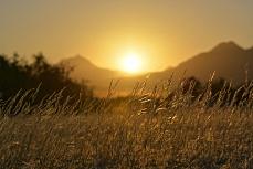 Sundowner im Gras