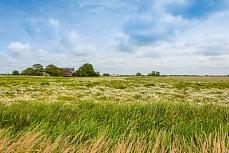 Landschaft mit Bauernhäusern bei Rodenäs