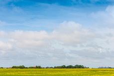 Landschaft bei Rodenäs in Schleswig-Holstein