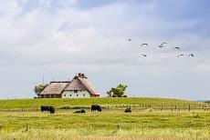 Ansicht auf ein nordfriesisches Bauernhaus
