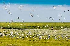 Vogelschwarm bei der Landung in Schüttsiel
