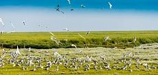 Versammelte Vögel am Hauke-Haike-Koog