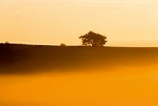 Goldener herbstmorgen Kiefer