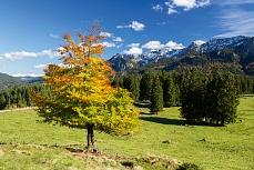 Herbst an der Buchenbergalm