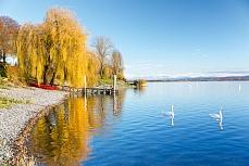 Herbstuferbild Allensbach II