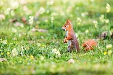 Hörnchen auf der Wiese