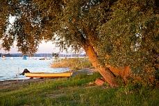 Mannenbach Ufer Sonnenuntergang