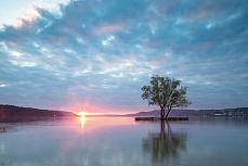 Wasserbaum Sonnenuntergang