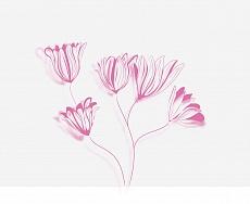 Blüten, Farbvariante: violett, pink
