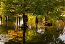 Herbst im Wasserwald
