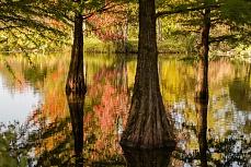 Herbstleuchten im Wasserwald
