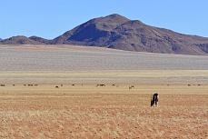 Oryx und Wildpferde