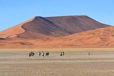 Sossusvlei - Oryxwanderung