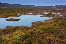 Feuchtbiotop auf der nordfriesischen Insel Sylt Listland