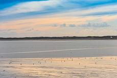 Rantumbecken im Europaschutzreservat Schleswig-Holstein