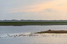 Sylt Rantum, Europaschutzreservat