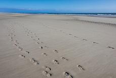 Fußabdrücke im Sand auf Amrum