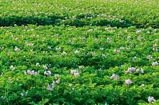 Blumenwiese am Soenke-Nissen-Koog