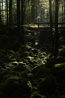 Moosbach im Morgenlicht von Dagmar Schneider