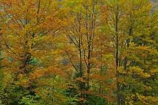 Herbstkleid von Dagmar Schneider