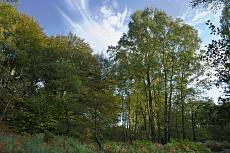 Waldlichtung von Dagmar Schneider