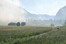 Wildblumenwiese im Morgennebel von Dagmar Schneider