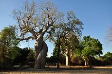 Baobab D'Amour von Dagmar Schneider