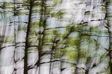 Baumkonturen von Dagmar Schneider