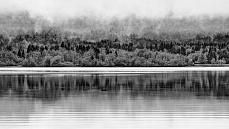 Ausschnitt im Nebel, Schwarz-Weiß von Dagmar Schneider