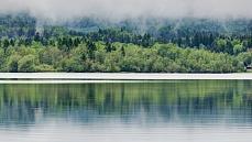Ausschnitt im Nebel, Farbe von Dagmar Schneider