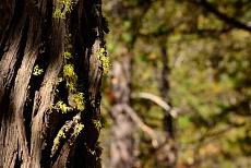 Wald im Yosemite National Park in der USA