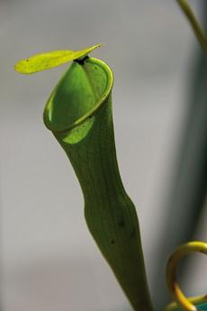 Mahé Victoria Trois Freres Trail fleischfressende Pflanze