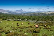 Gebirgslandschaft im Rondane-Nationalpar