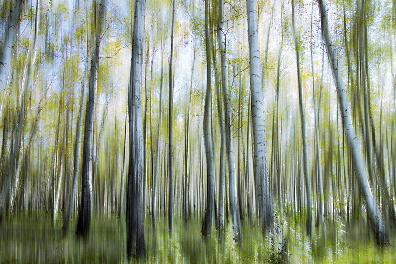 Designer tapete im birkenwald c steinicke tapeterie - Tapete birkenwald ...