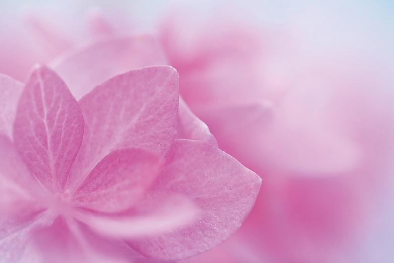 rosa Natur