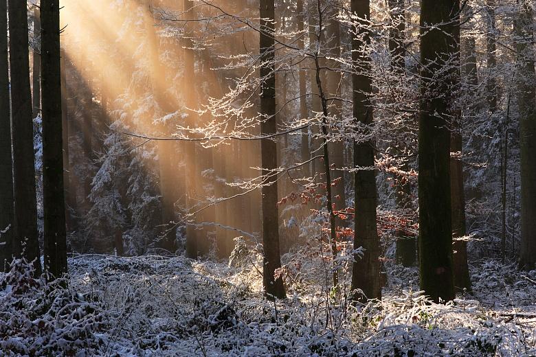 Lichtspot im Winterwald